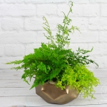 green-fern-wedding-23