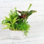 green-fern-wedding-24