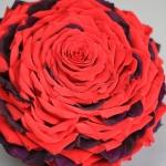 composite-rose---glamelia-of-red-and-eggplant-petals_29142250975_o